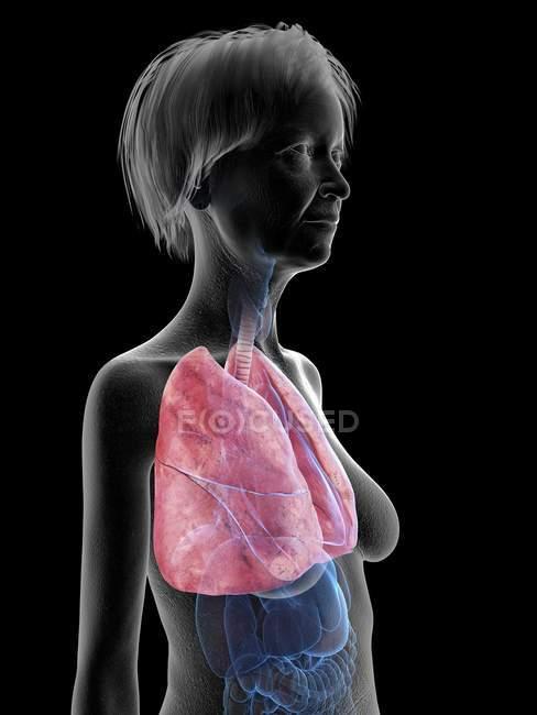 Ilustración de silueta de mujer mayor mostrando pulmones sobre fondo negro . - foto de stock