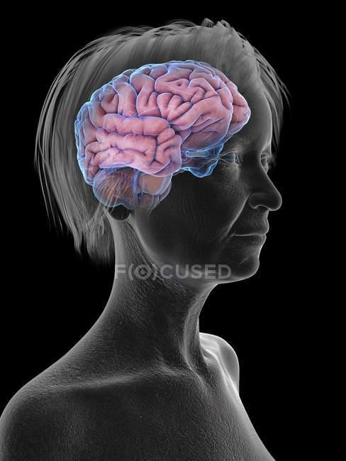 Illustration médicale de la silhouette d'une femme âgée avec un cerveau surligné sur fond noir . — Photo de stock