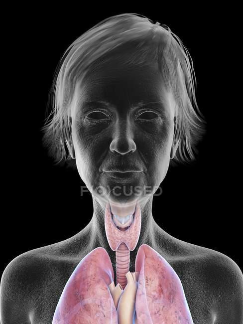 Ilustración de la silueta de mujer mayor que muestra la anatomía de la garganta sobre fondo negro . - foto de stock