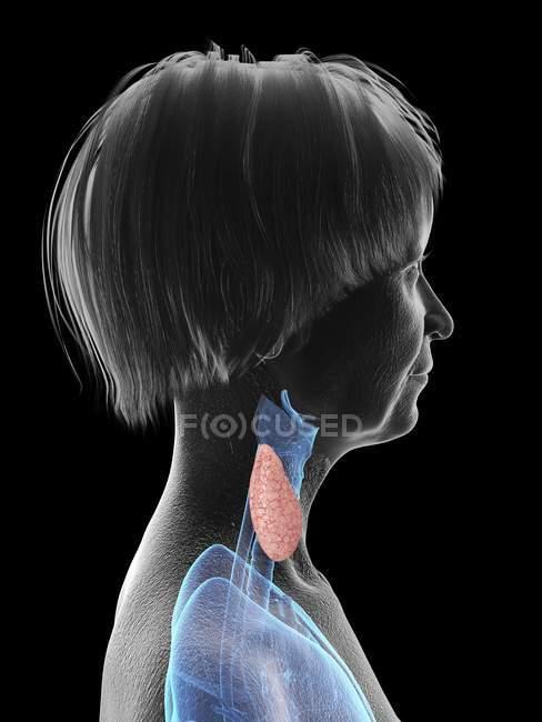Ilustración de silueta de mujer mayor mostrando laringe sobre fondo negro . - foto de stock