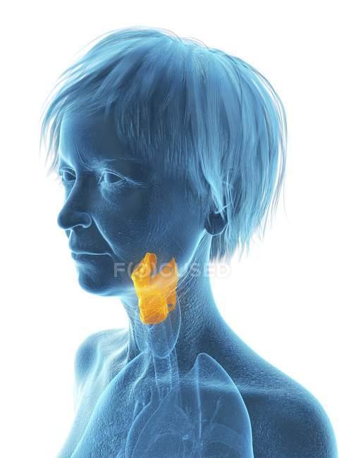 Ilustración de silueta de mujer mayor mostrando laringe sobre fondo blanco . - foto de stock