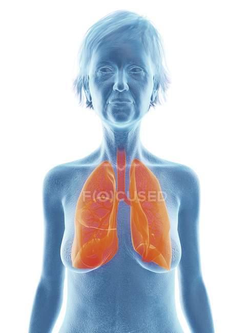 Illustrazione di donna anziana silhouette blu con polmoni evidenziati su sfondo bianco . — Foto stock