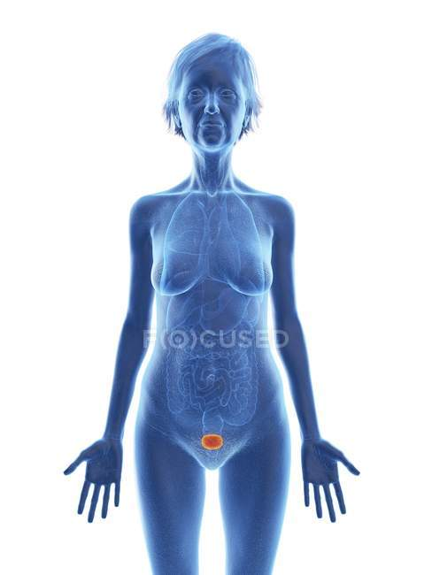 Ilustración de silueta de mujer mayor con vejiga de color sobre fondo blanco . - foto de stock
