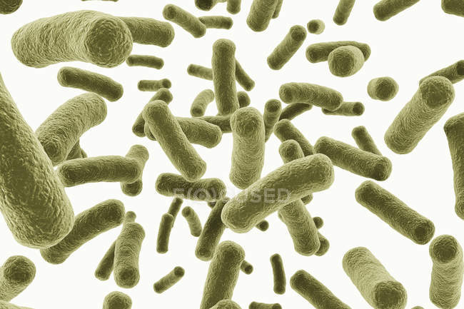 Digital illustration of green bacteria cells on white background. — Stock Photo