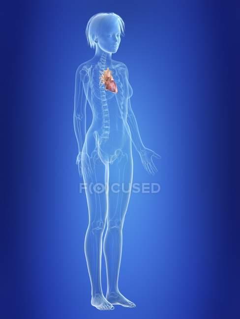 Ilustración del corazón en silueta del cuerpo femenino . - foto de stock