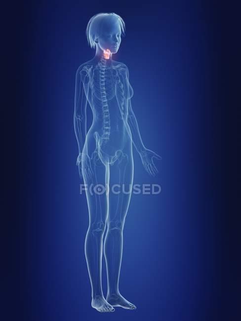 Ilustración de silueta femenina con laringe dolorosa . - foto de stock