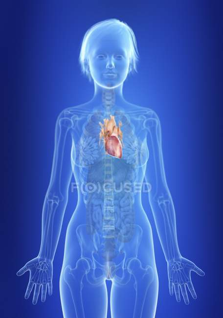 Illustrazione del cuore nella silhouette del corpo femminile . — Foto stock