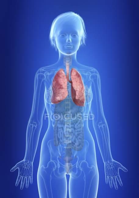Ilustración de pulmones en silueta del cuerpo femenino . - foto de stock