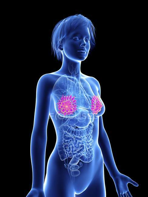 Illustration of female silhouette with highlighted mammary glands. — Stock Photo