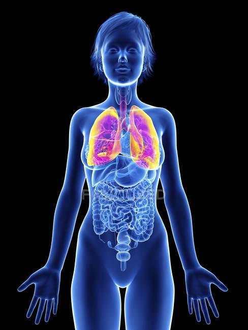 Ilustración de silueta femenina con pulmones resaltados . - foto de stock