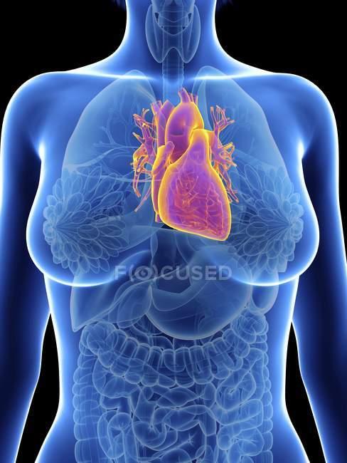 Ілюстрація жіночий силует підкреслив серцем. — стокове фото