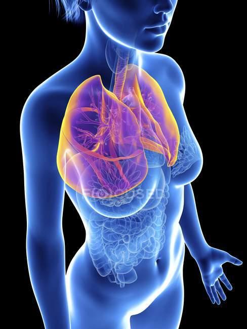 Illustrazione della silhouette femminile con polmoni evidenziati . — Foto stock