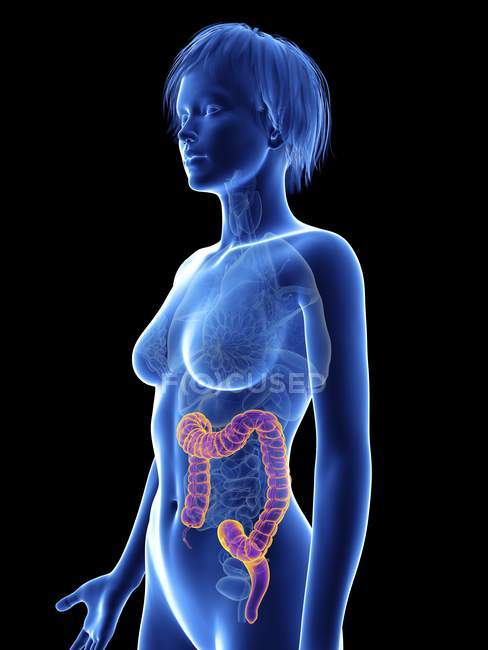 Illustration of female silhouette with highlighted colon. — Stock Photo