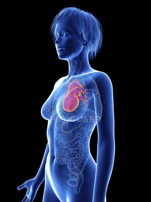 Illustration der weiblichen Silhouette mit hervorgehobenem Herz. — Stockfoto