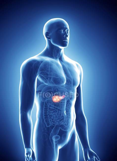 Illustration of pancreas cancer in human body silhouette. — Stock Photo