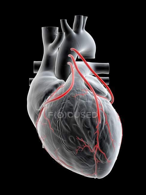 Ilustración de tres bypass en el corazón humano . - foto de stock