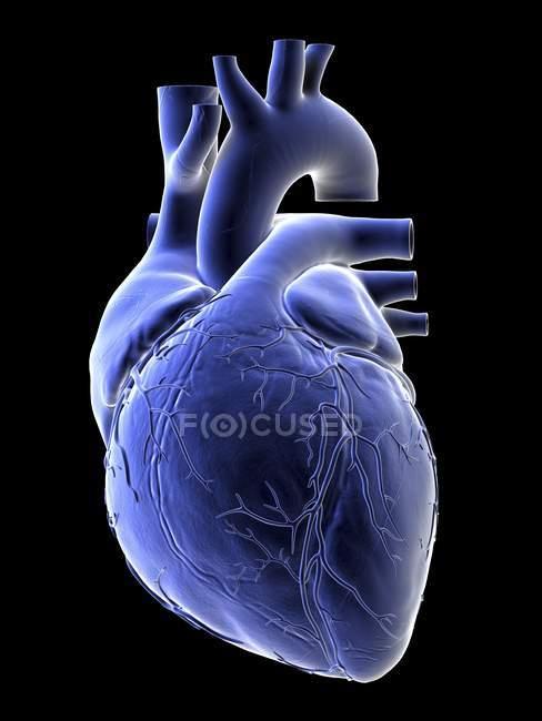 Ilustración del corazón humano azul sobre fondo negro . - foto de stock