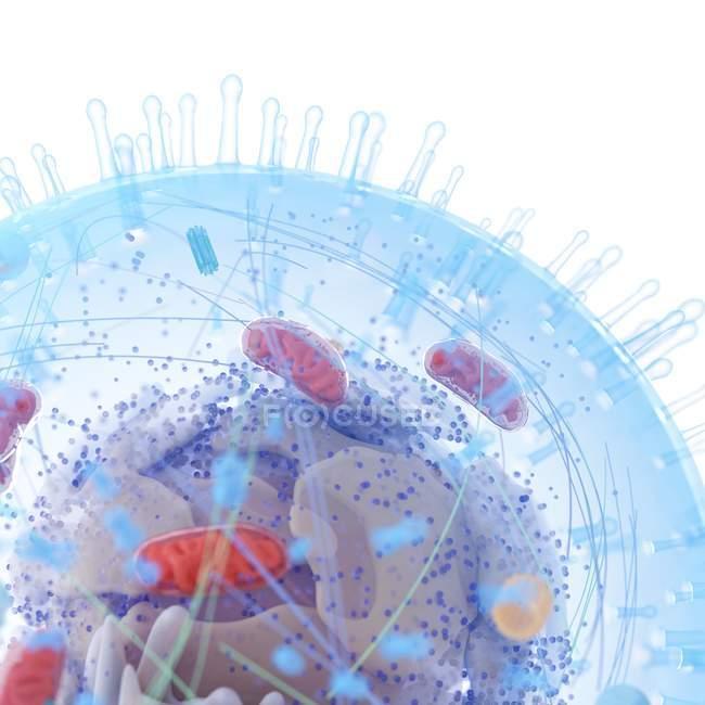 Medizinische Illustration der menschlichen Zellstruktur auf weißem Hintergrund. — Stockfoto