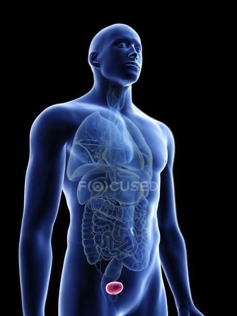 Ilustração da silhueta azul transparente do corpo masculino com bexiga colorida . — Fotografia de Stock
