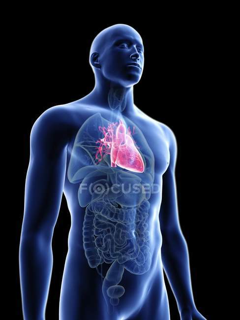 Illustration of transparent blue silhouette of male body with colored heart. — Stock Photo
