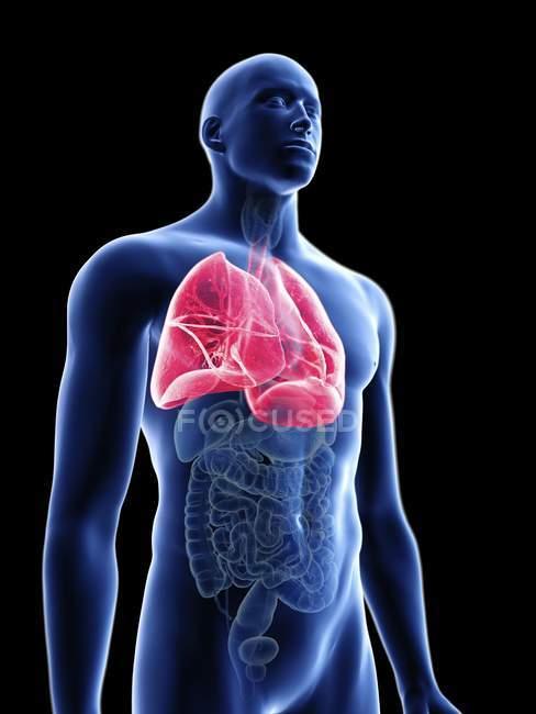 Ilustração da silhueta azul transparente do corpo masculino com pulmões coloridos . — Fotografia de Stock