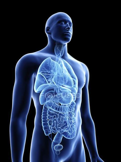 Illustration of transparent blue silhouette of male body with internal organs. — Stock Photo