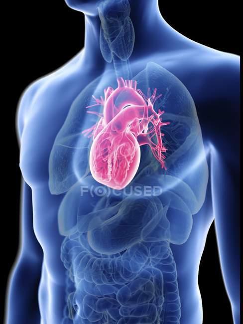 Ілюстрація прозорі синій силует чоловічого тіла з кольоровими серця. — стокове фото