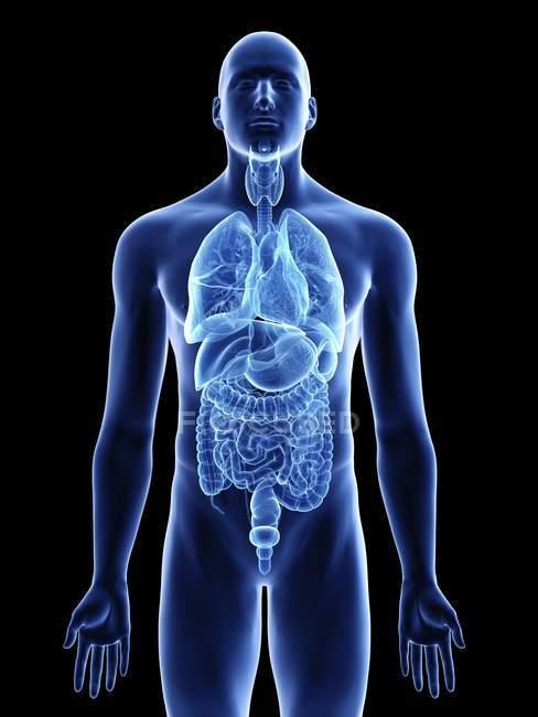 Ilustración de órganos en silueta corporal masculina sobre fondo negro . - foto de stock