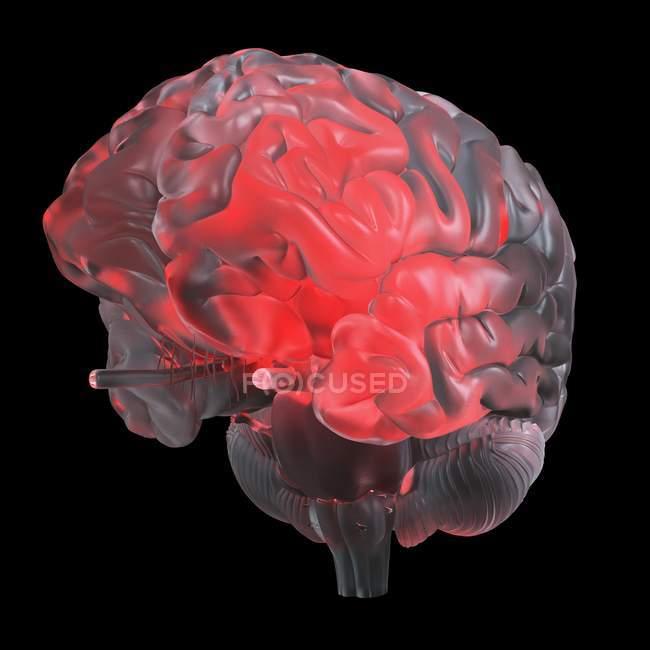 Ilustración del cerebro de vidrio transparente brillante rojo . - foto de stock