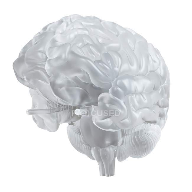 Illustration of glass brain on white background. — Stock Photo