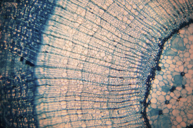 Abstract view of plant tissue in light micrograph. — Stock Photo