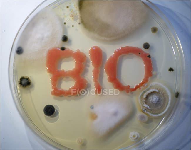 Nahaufnahme von Bio-Schriftzügen aus Wachstumskultur in Agar-Platte, mikrobiologisches Konzept. — Stockfoto
