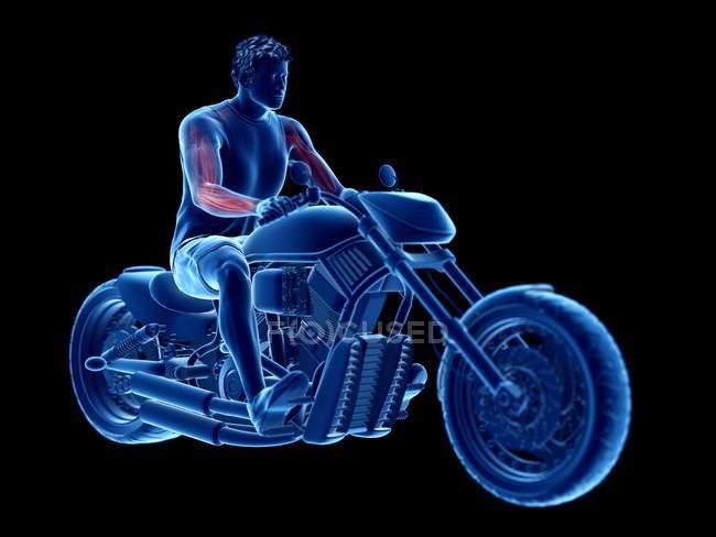 Ilustración procesada 3D de músculos del motorista sobre fondo negro. - foto de stock
