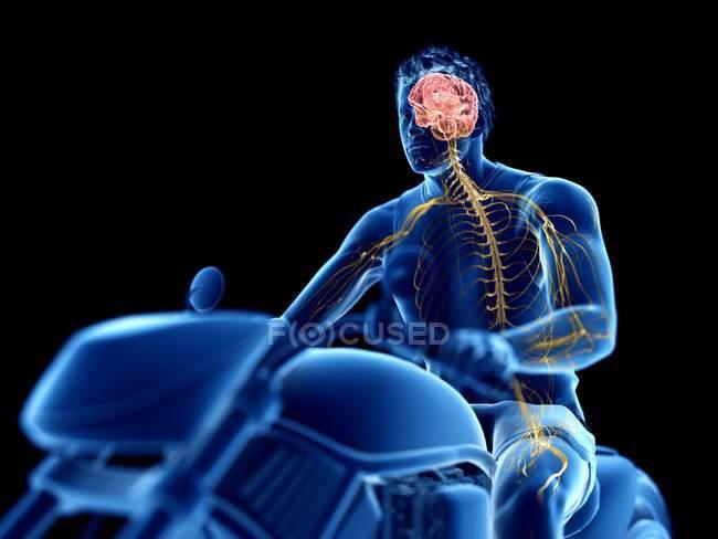 3d renderizado ilustración del cerebro del motorista sobre fondo negro . - foto de stock