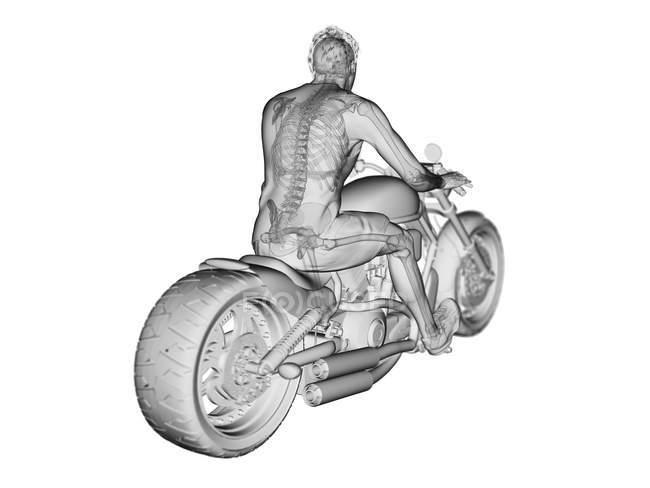3D prestado ilustración del esqueleto motorista sobre fondo blanco. - foto de stock
