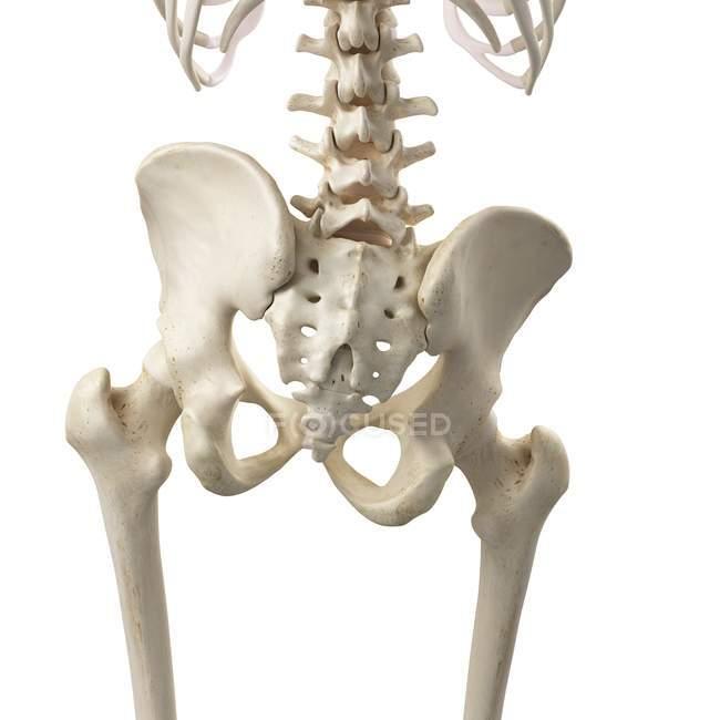 3d ilustración de la pelvis inclinada en el esqueleto humano . - foto de stock