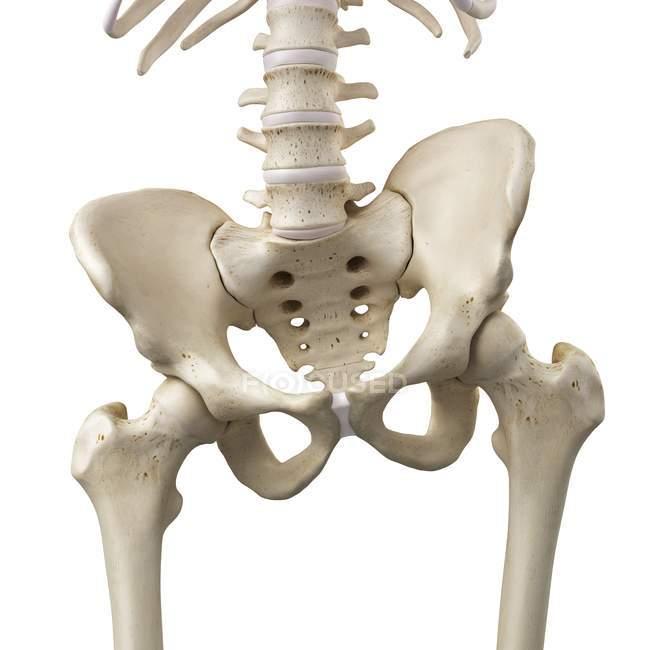 3d rendered illustration of tilted pelvis in human skeleton. — Stock Photo