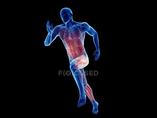 3d renderizado ilustración de los músculos activos jogger sobre fondo negro . - foto de stock