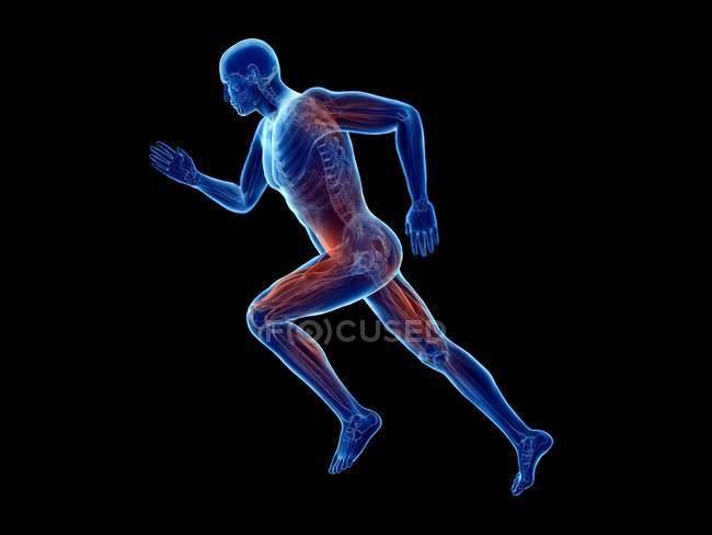 3d renderizado ilustração de jogger músculos ativos no fundo preto . — Fotografia de Stock
