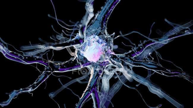 3d renderizado ilustración de la célula nerviosa humana sobre fondo negro . - foto de stock