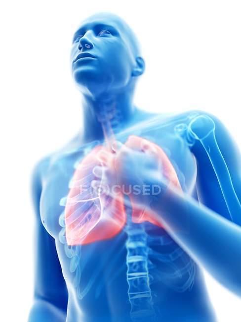 3d renderizado ilustración de silueta azul del hombre con pulmones inflamados sobre fondo blanco . - foto de stock