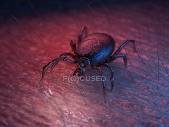3d rendered colored illustration of tick on skin surface. — стоковое фото