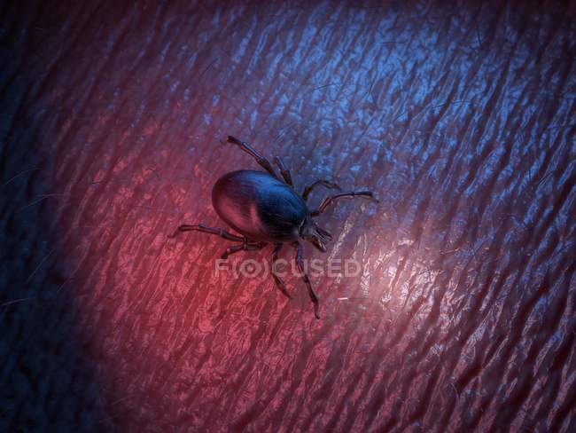 3d rendered colored illustration of tick on skin surface. — Stock Photo