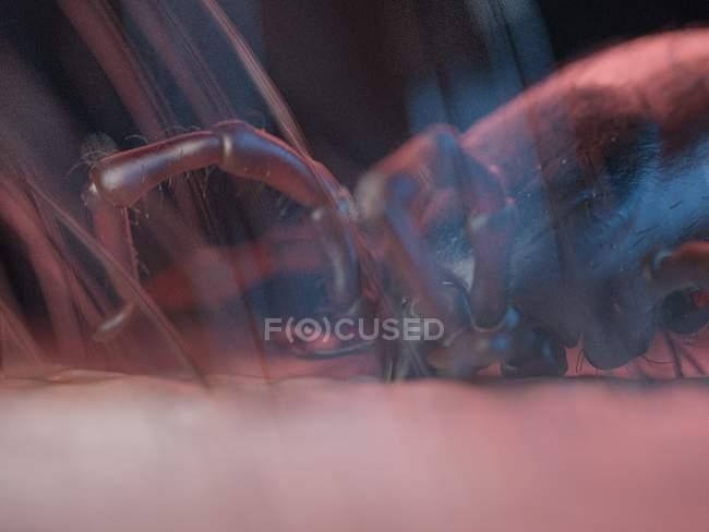 Ilustración procesada 3D de pequeña señal en la superficie de la piel. - foto de stock