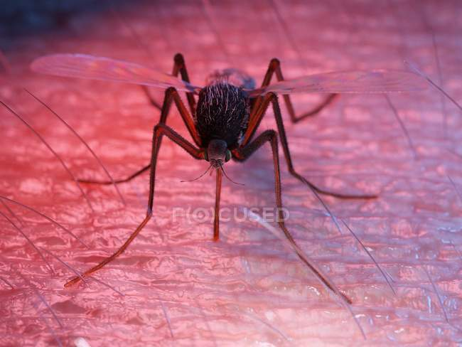 Illustrazione a colori di parassiti zanzare sulla pelle . — Foto stock