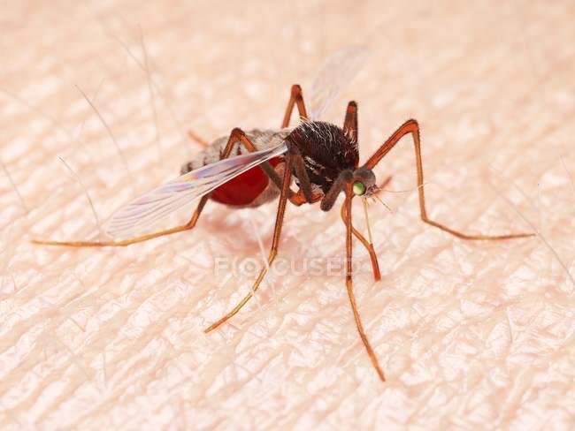 Ilustración digital de mosquitos chupando sangre en la piel . - foto de stock