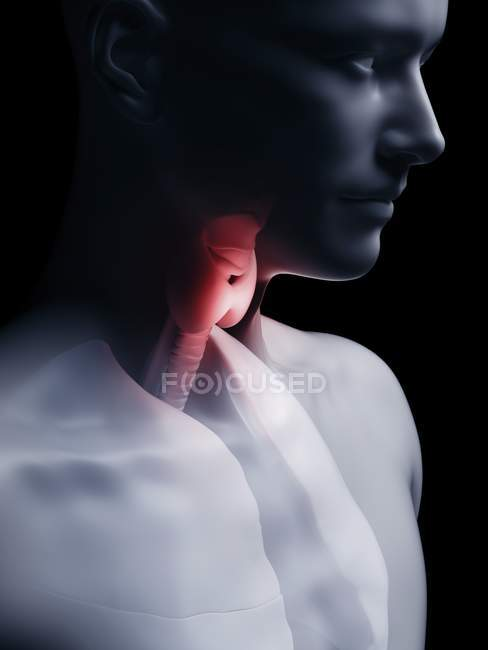 Illustration of human thyroid gland in body silhouette. — Stock Photo