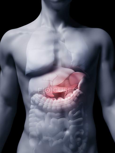 Illustration du pancréas humain en silhouette corporelle . — Photo de stock