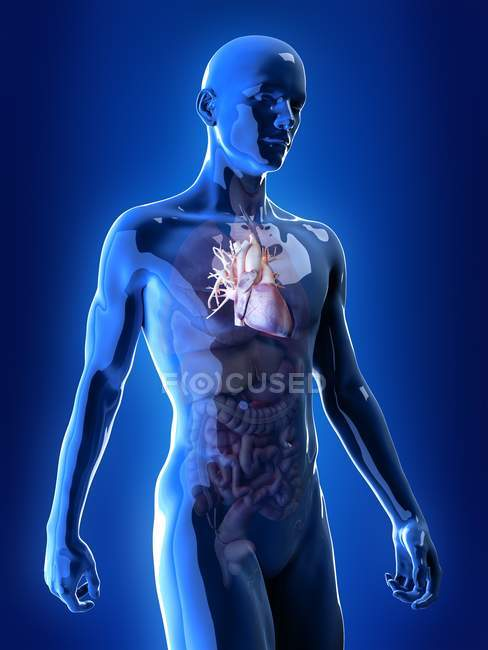 Illustrazione del cuore nella silhouette del corpo umano . — Foto stock