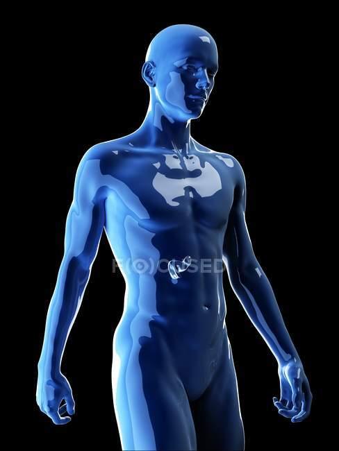 Ilustración del páncreas humano en la silueta corporal . - foto de stock